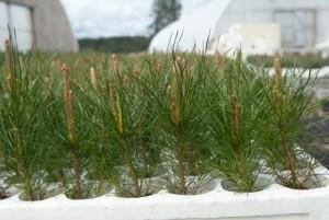Native Plants Inventory